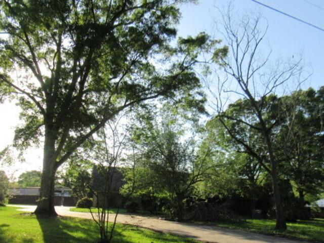 9157 Pertius Rd, Saint Amant, Louisiana