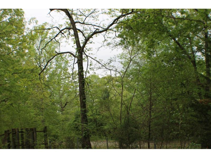 42 Goad Private Dr, Somerville, Alabama